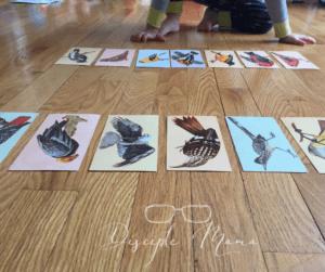 Bird flashcards on a wood floor | Disciple Mama
