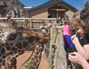 toddler in mother's arms, smiling at a giraffe | Disciple Mama